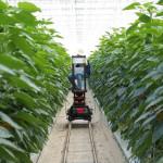 [칼럼] 농업의 4차 산업혁명 스마트팜