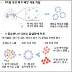 사람 3D 폐포 배양 기술, 코로나19 감염 기전 규명했다.